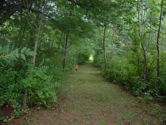rainy walk down the path