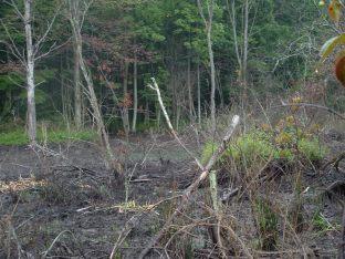 Beaver pond destroyed