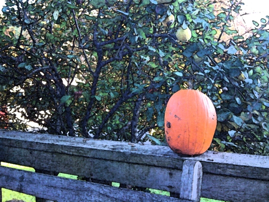 pumpkins and quince 2011
