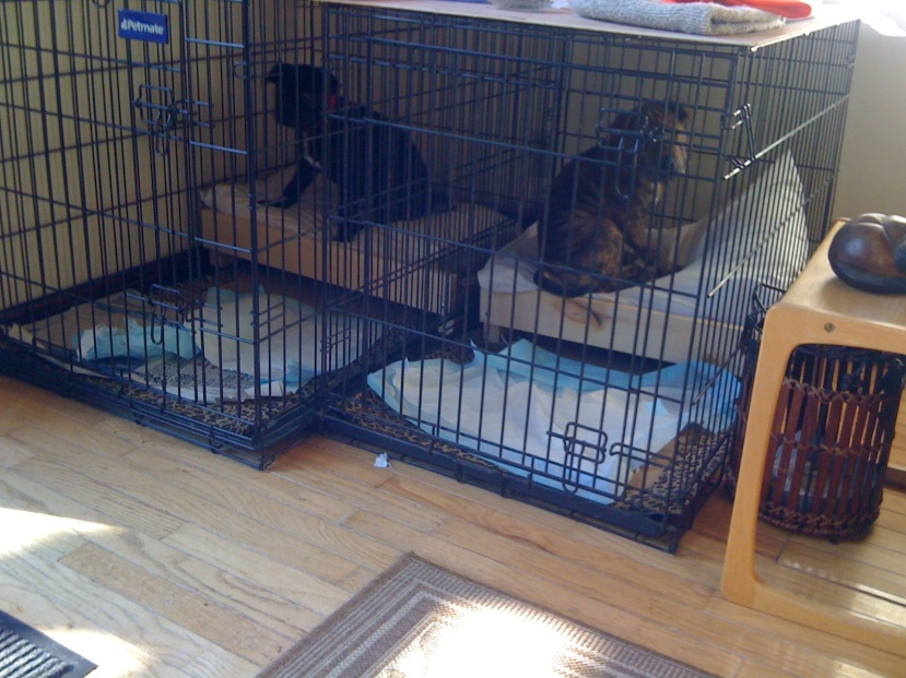 puppies in sleepy time cages
