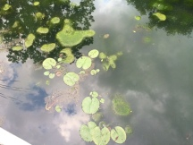 Outerspace or lily pads on a cloudy day