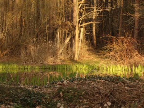 on-golden-pond-8-just-spring