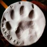 Macadew's paw