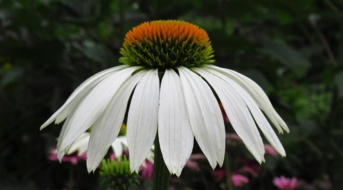 Flowers: Twenty-Five years On a Farm